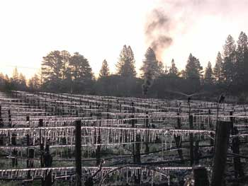 Spring Cold Snap Damages California Vineyards
