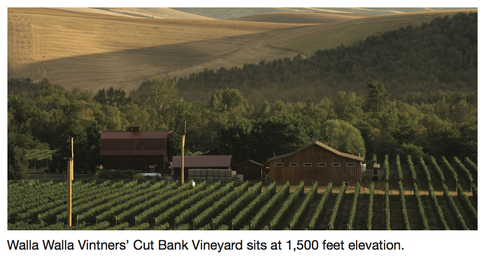 Walla Walla Winemakers Eye Vineyard Sites With Higher Elevation - Higher elevation