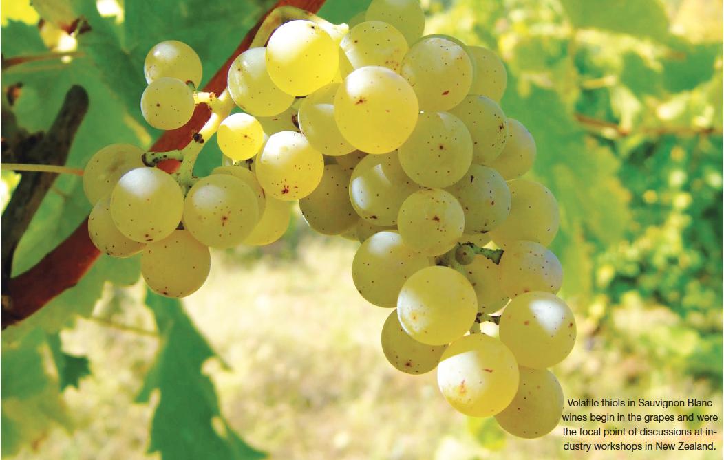 Wines Vines Analytics