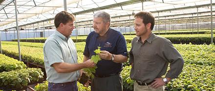 Grapevine Nurseries Face Supply