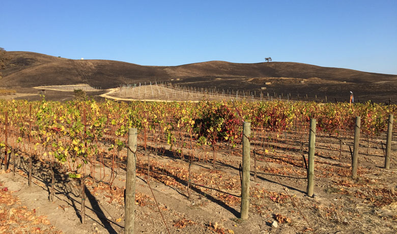wine  wineries vineyards fire property land