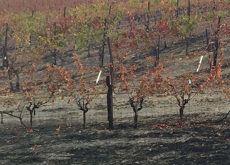 wine  vineyard erosion fire
