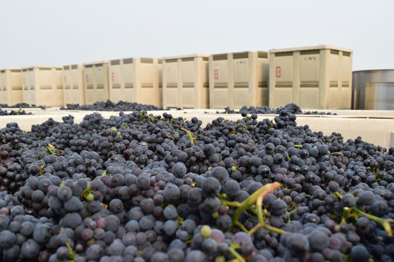 wine vineyard grapes oregon harvest crush