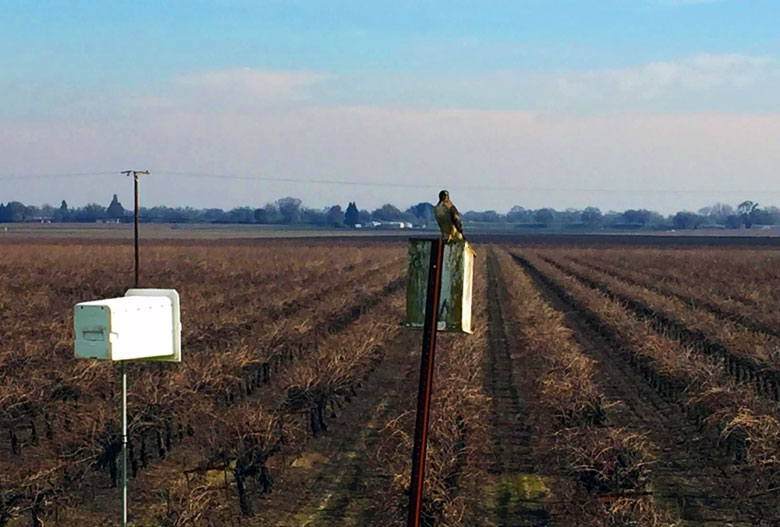 wine vineyard grapes sustainability lodi rules certification