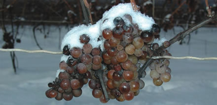 Michigan Ice Wine Rises When Mercury Falls