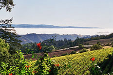 Jackson Makes a Deal Chateau Potelle sells its Mount Veeder holdings