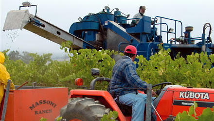 High-end winemakers warm slowly to machine harvesting