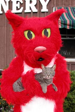 Hazlitt Red Cat