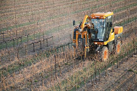 mechanized vineyard