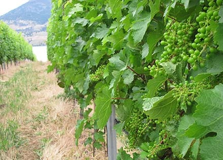 british columbia wine grape council meeting