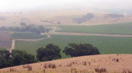 santa barbara vineyard fracking