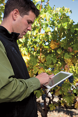 iPad in vineyard