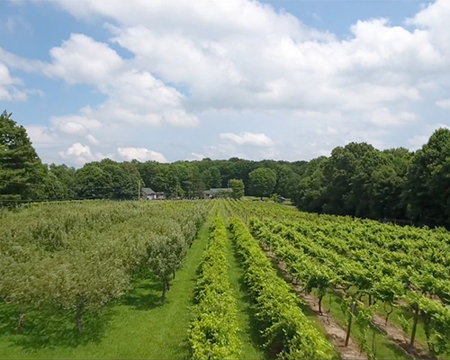 Winery with Vineyard in Southwestern PA