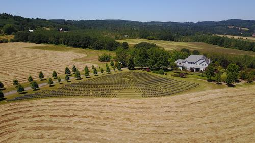 Yamhill Carlton Estate with 40 Ac Plantable Land